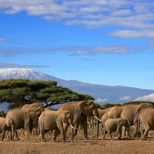 Wildlife Crime Threatens Species <em>and</em> Fuels Transnational Crime